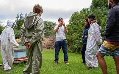 Nueva jornada en nuestro Centro Apimedicina, Isla de Maipo